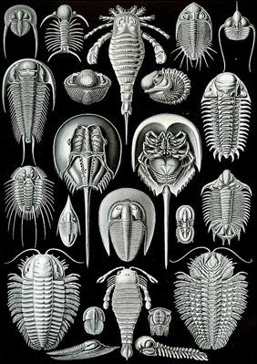 Lámina de E. Haeckel