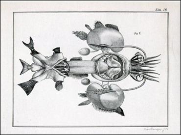 Uno de los muy particulares collages de Svankmajer