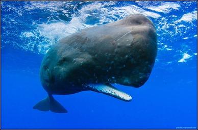 La impresionante imagen de un cachalote real, con su mandíbula inferior dentada