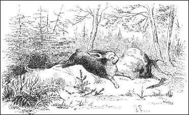 La liebre salta por encima del pequeño abeto, en el cuento de Andersen, dibujo de V. Pedersen
