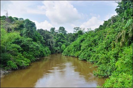 Por orillas como esta del río Congo navega Marlow en El corazón de las tinieblas