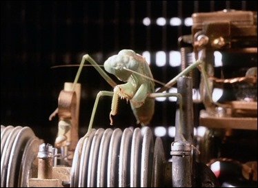 La mantis acecha a la horniga sin saber que ella tambien esta siendo acechada
