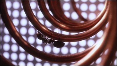 Las diminutas hormigas invaden cualquier espacio